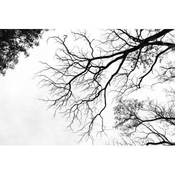 Холст Небо 54STR-SKY