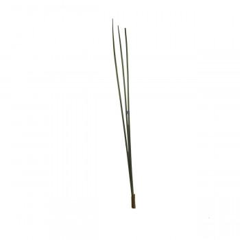 Тростниик зеленый 130 см 7C78D00002