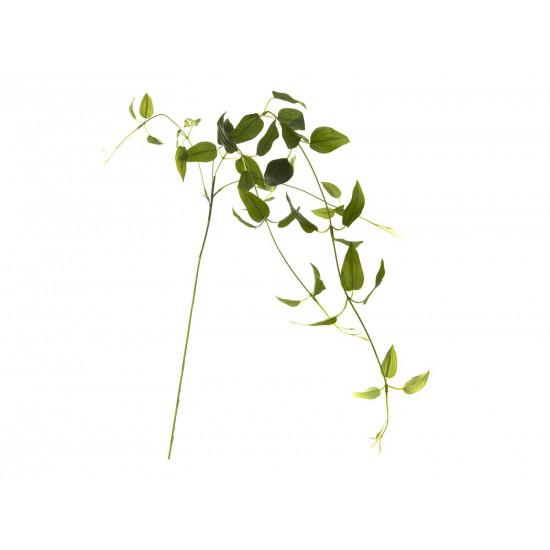 Листья клемантиса зеленые 90см 7C48D00001 в интернет-магазине ROSESTAR фото