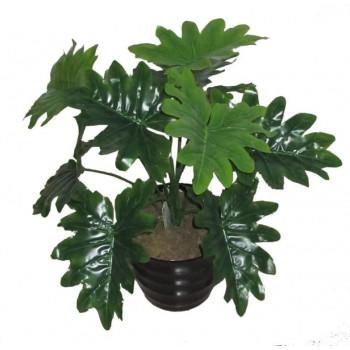 Филодендрон с рассеченными листьями 55см LM-78370PV/12
