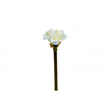 Амариллис кремовый, 57см 9F27273-1538CR