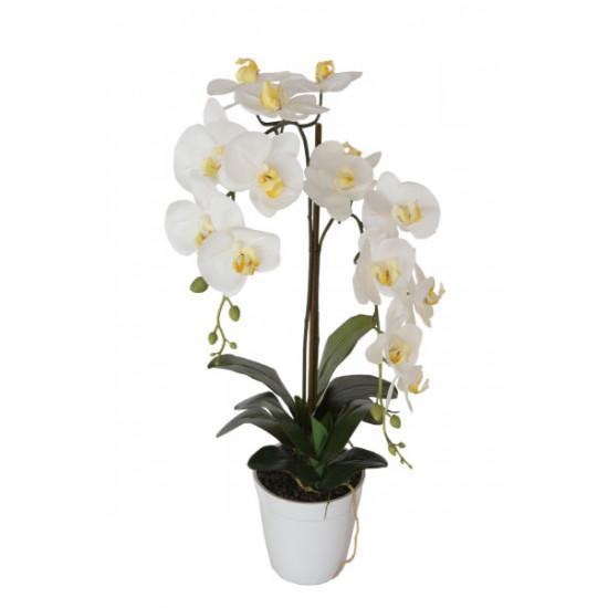 Орхидея белая в горшке 29BJ-170-13 в интернет-магазине ROSESTAR фото
