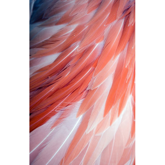 Постер Перья 50*70см 54STR-FEATHER  в интернет-магазине ROSESTAR фото