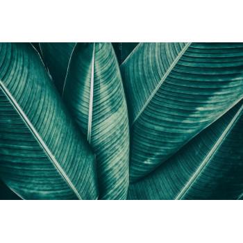 Постер Пальмы -1 100*70см 54STR-PALM1