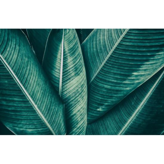 Постер Пальмы -1 100*70см 54STR-PALM1 в интернет-магазине ROSESTAR фото